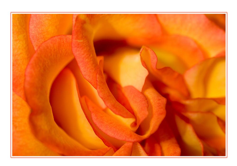 Rosenspielerei
