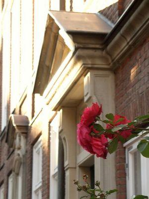 Rosenstock vor klassizistischer Fassade