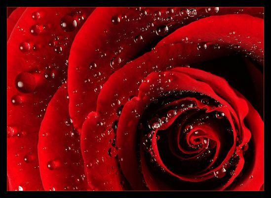 rosenwasser II