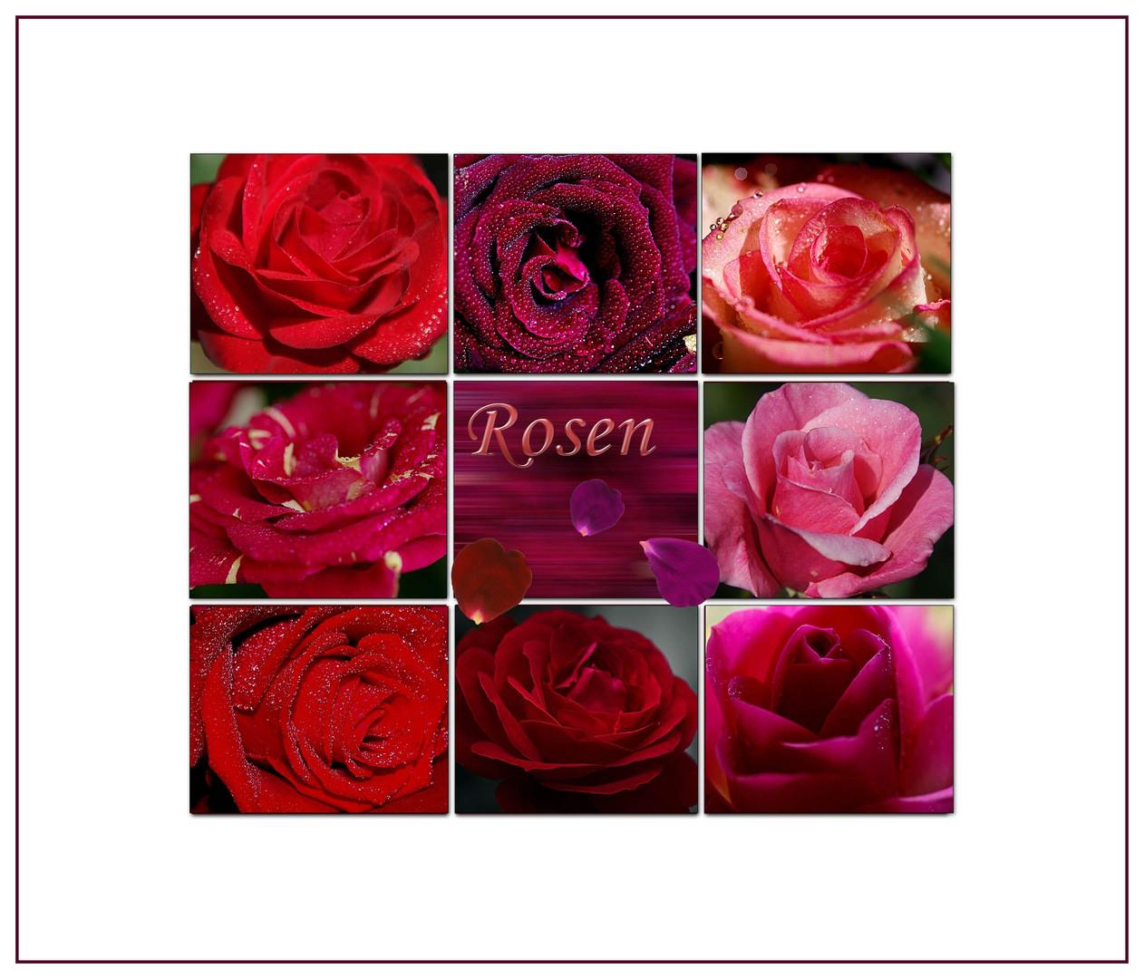 Rosenzauber die Erste