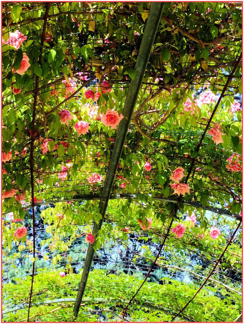 Roses-ciel