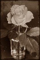 Roses en sepia