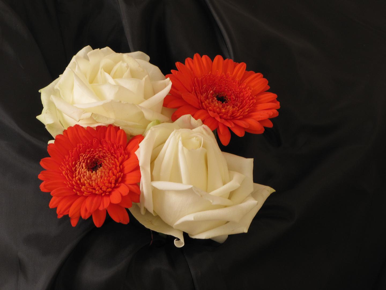 Roses et gerberas