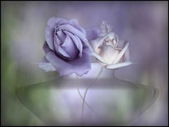 roses...............