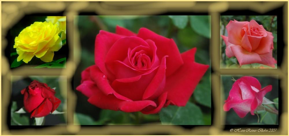 Roses forever !