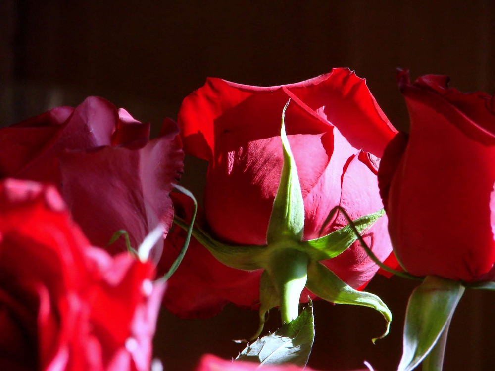 Roses in the sun.....2