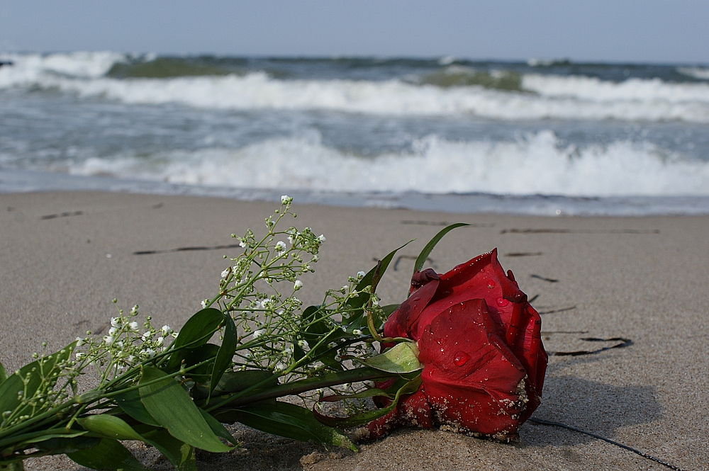""" Roses on the Beach2 """