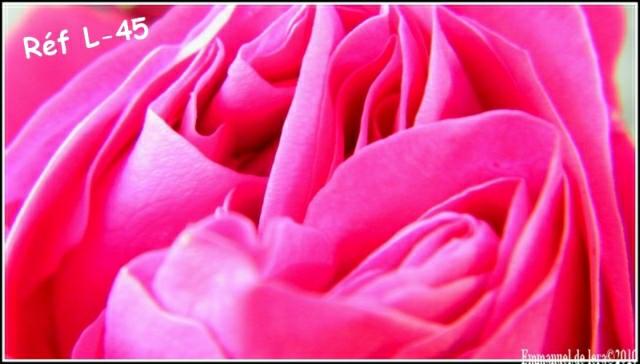 roses ou pas