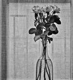 Roses pour vous tous