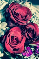 Roses#1
