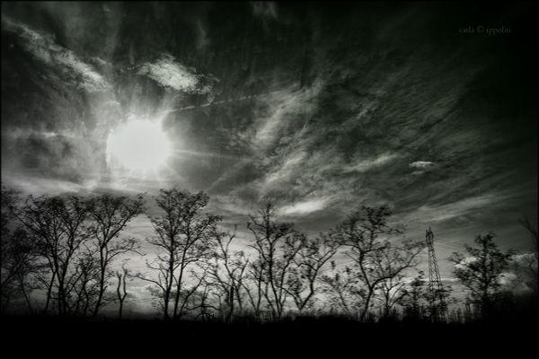 Roseti del cielo