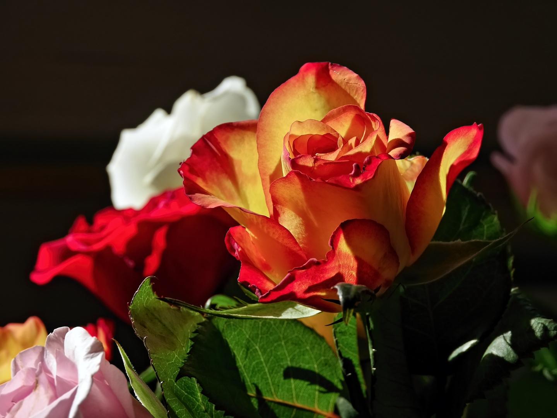 rosige Farben