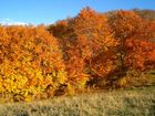 rosso d'autunno