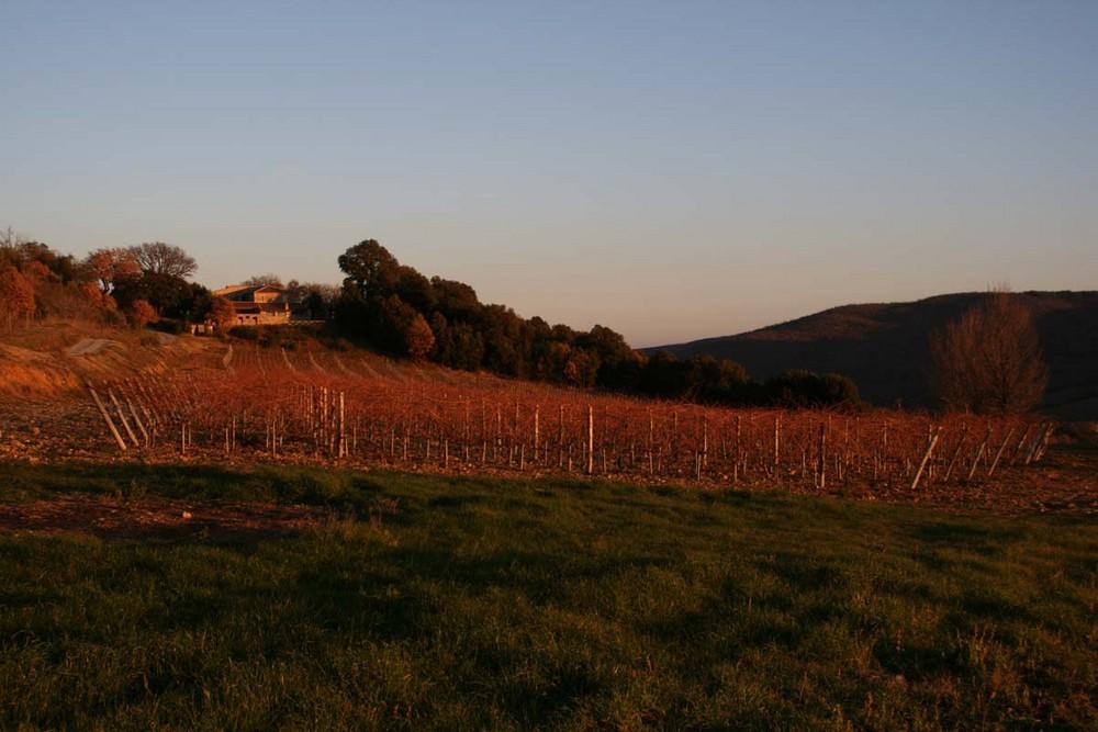 'Rosso' della Toscana