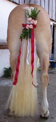 Rosstag Rottach Egern 2008 , 40jähriges Jubiläum