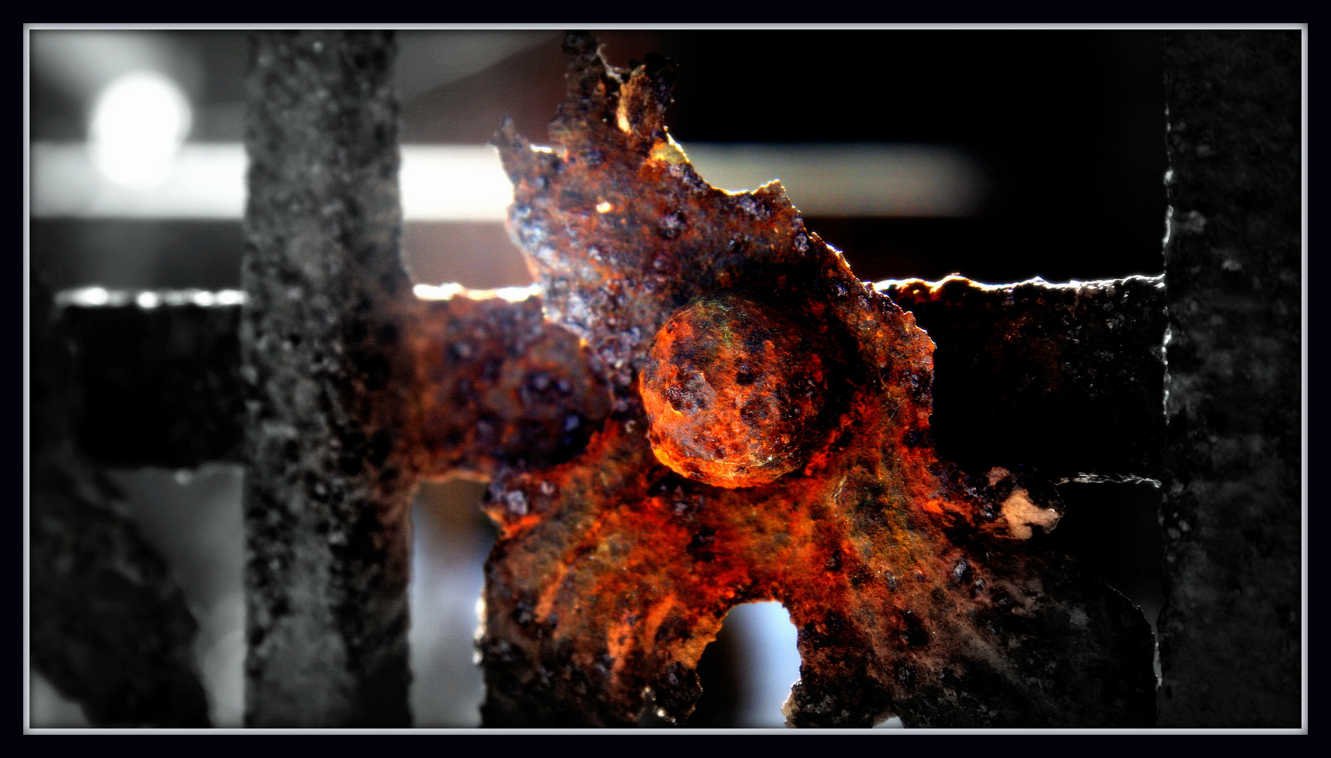 Rost1