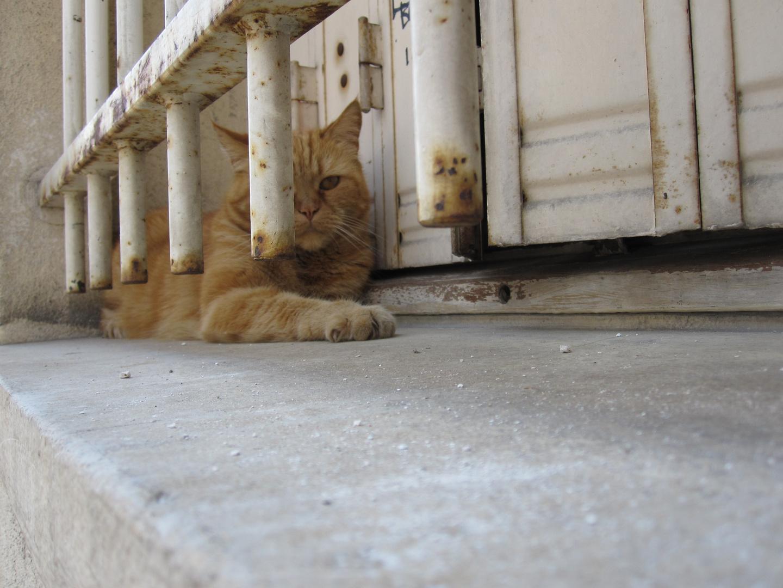Rostbraune Katze