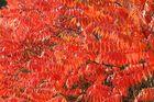 rostende Blätter