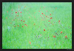 rot auf gruen
