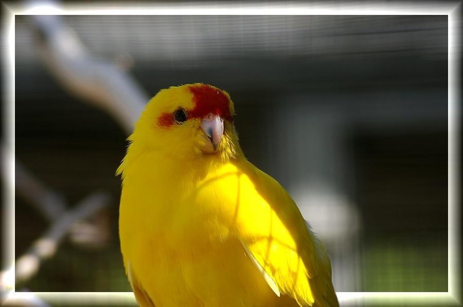 Rot-Gelb