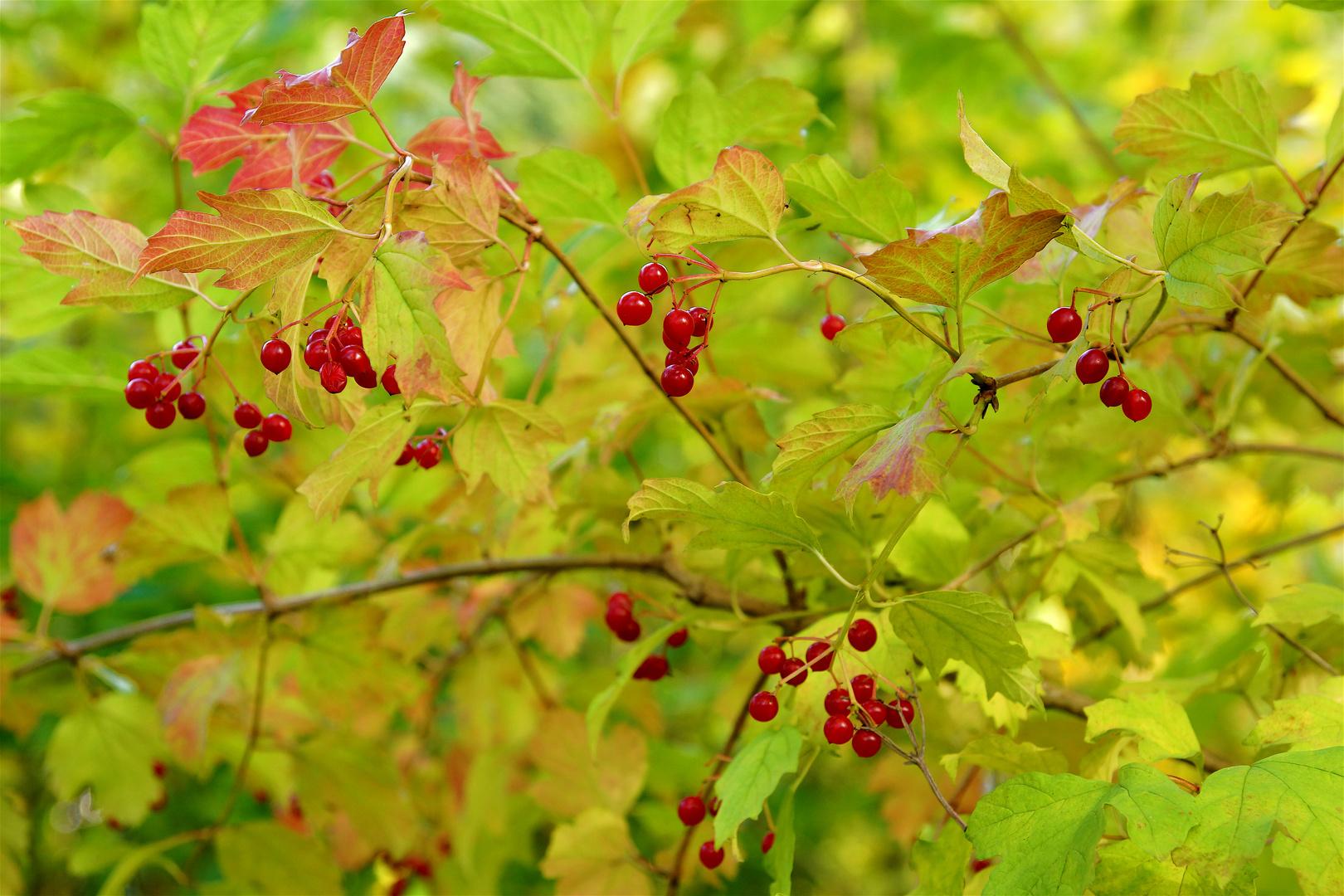 rot-gelb-grün
