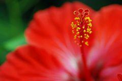 [ Rot - Gelbe Blüte]