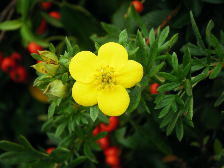 Rot- Gelbe Farbtupfer