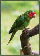 Rot - Grün