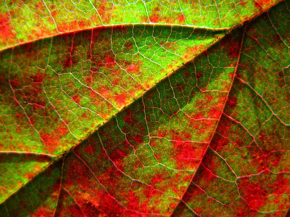 Rot - Grün - Kontrast Foto & Bild