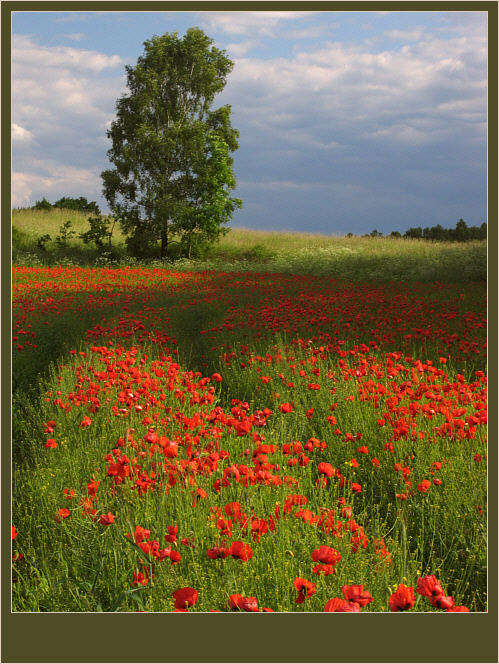 Rot-Grüne Harmonie :-)
