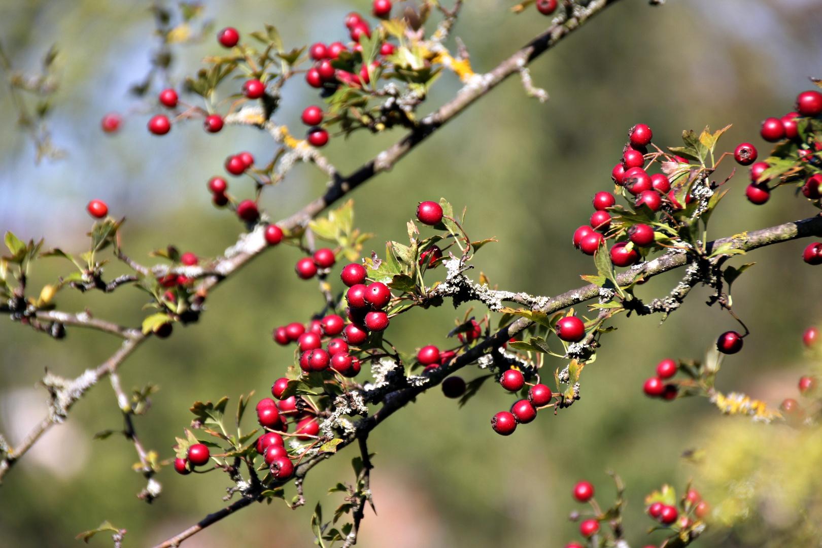 Rot im Herbst