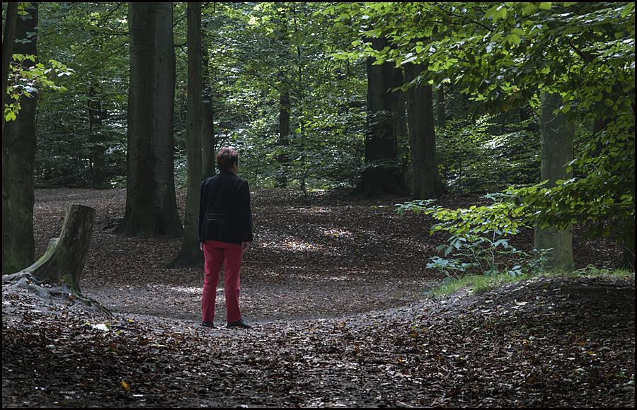 Rot im Wald