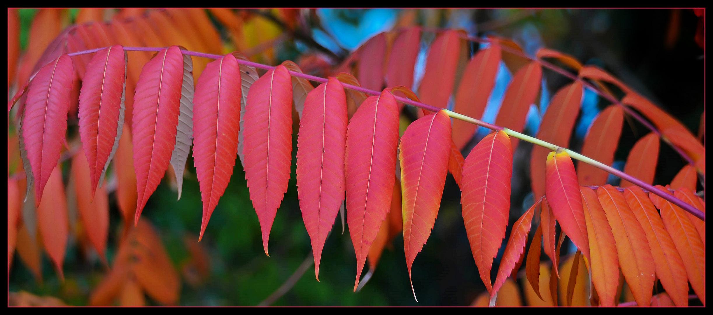 Rot, rot, rot sind alle meine Blätter