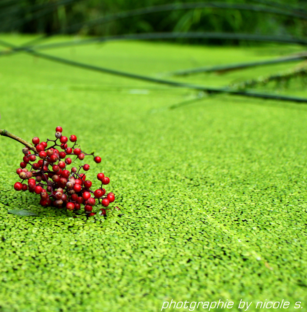 rot trifft grün