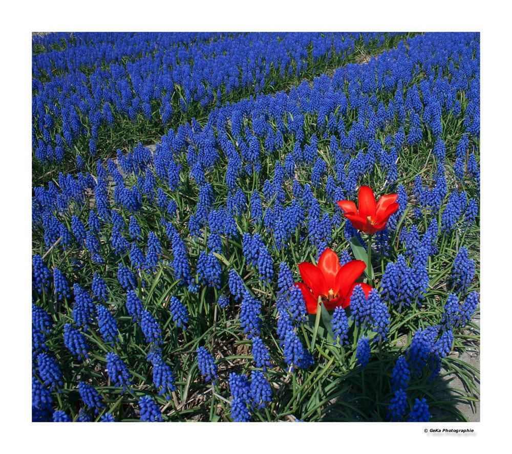 Rot und Blau