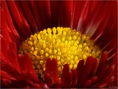 Rot und Gelb