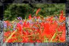 rot und lila