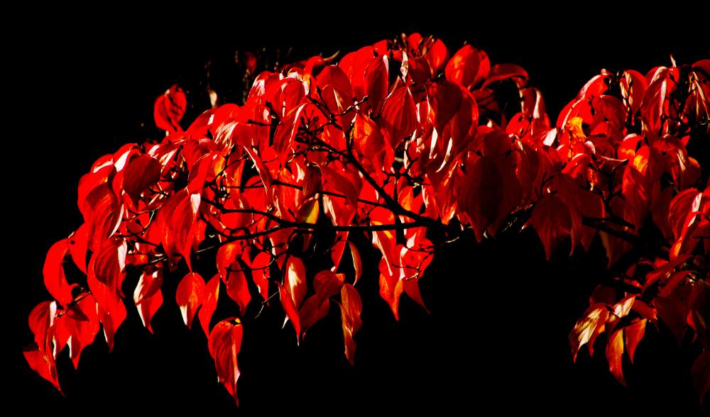 rot vor schwarz