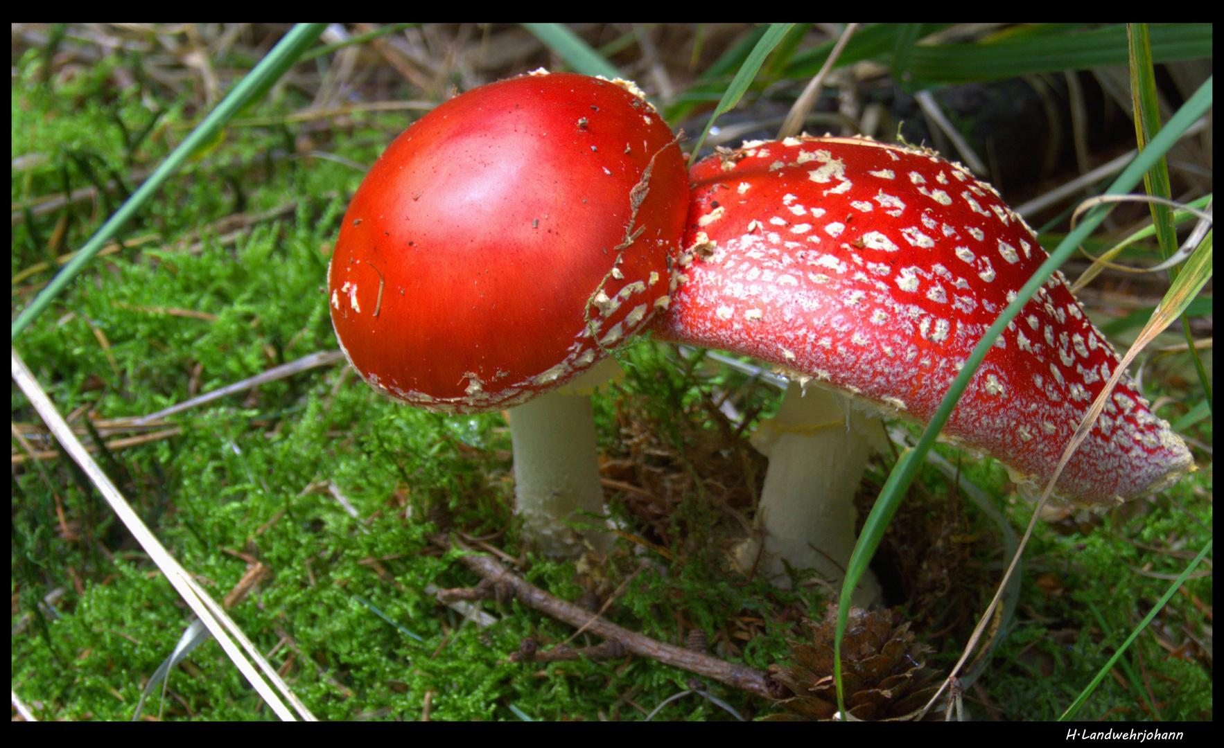 Rot-Weiß-Käppchen
