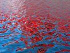 Rot wie Blut