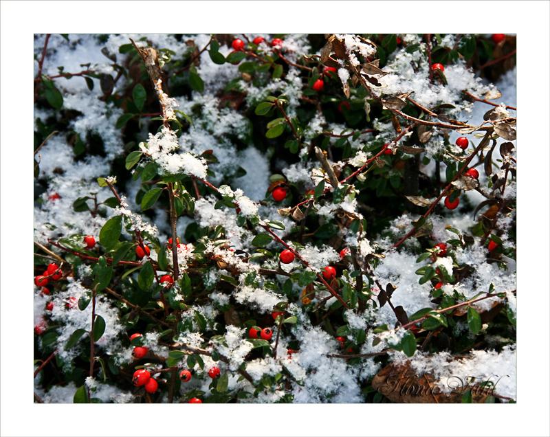Rot wie Blut und weiß wie Schnee