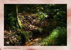 Rotbachroute im Herbst