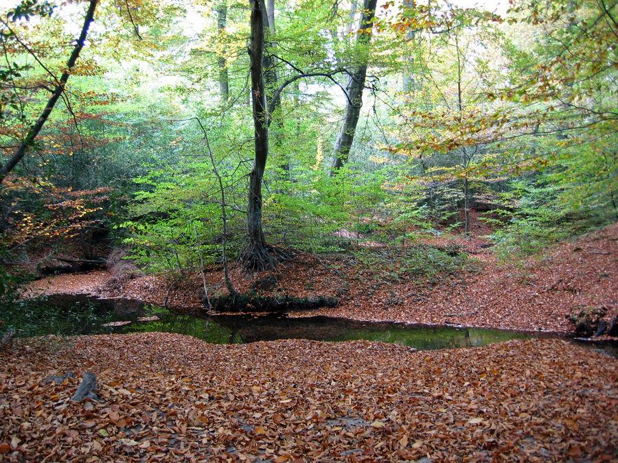 Rotbachtal im Herbst 2007