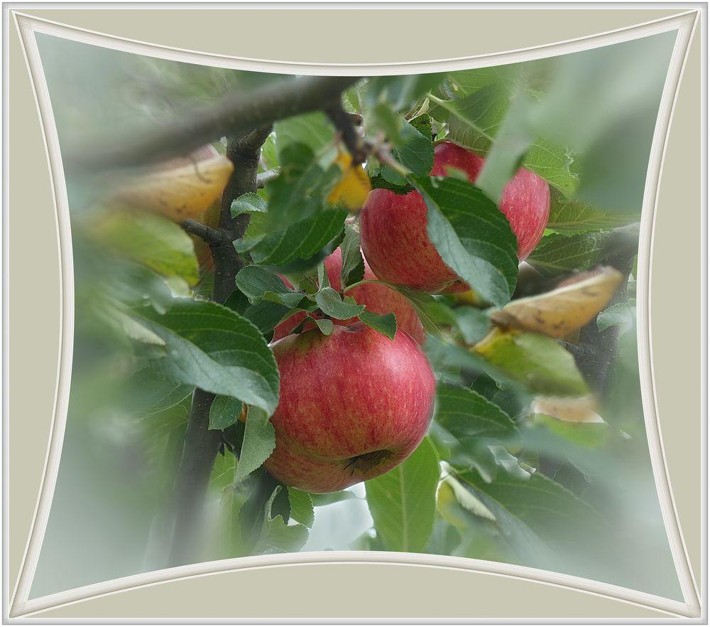 Rote Apfel