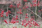 Rote Bällchen