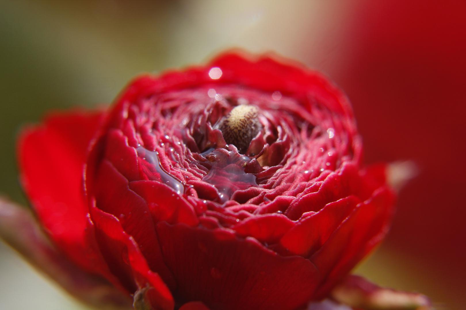 Rote Blüte 2
