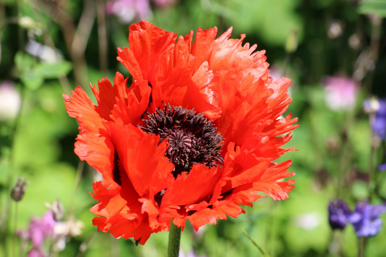 Rote Blüte