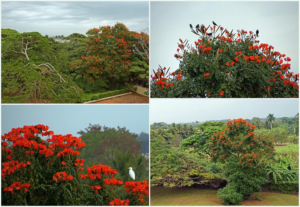 ..rote Blüten..