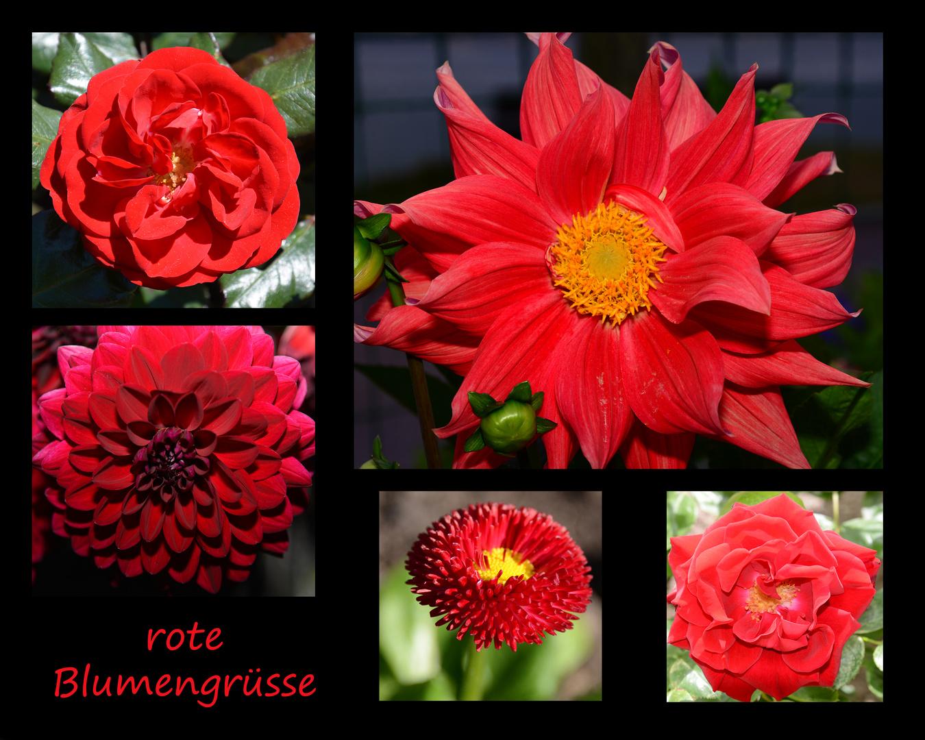rote Blumengrüsse
