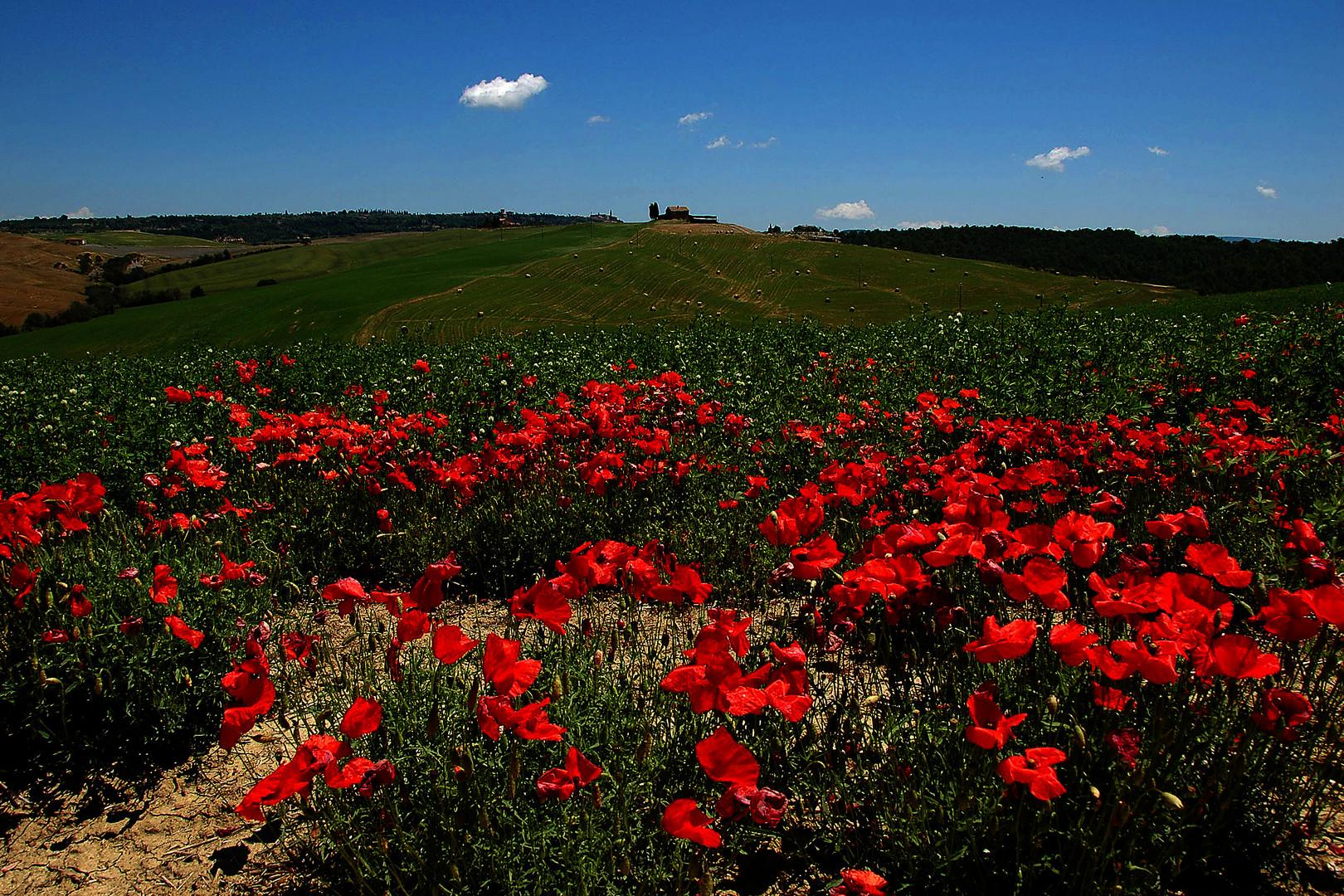 Rote Crete
